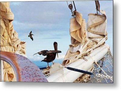 Bowsprit Pelicans Metal Print by Deborah Smith