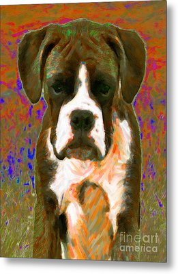 Boxer 20130126v1 Metal Print by Wingsdomain Art and Photography