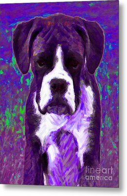 Boxer 20130126v6 Metal Print by Wingsdomain Art and Photography