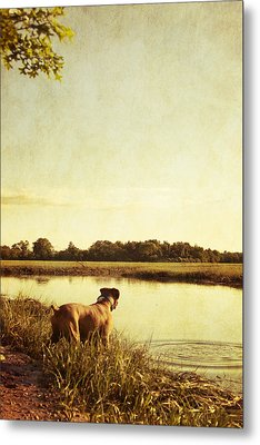 Boxer Dog By The Pond At Sunset Metal Print by Stephanie McDowell