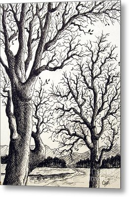 Metal Print featuring the drawing Branches by Carol Hart