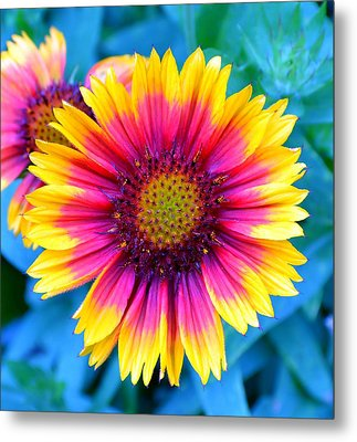 Metal Print featuring the photograph Brilliance by Deena Stoddard