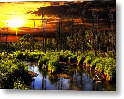 Brookstreet - Sunrise In The Forest Metal Print by Gary Smith