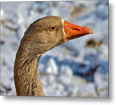 Brown Goose Metal Print by Thomas  MacPherson Jr