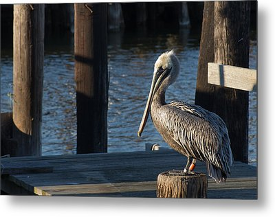 Metal Print featuring the photograph Brown Pelican by Gregg Southard