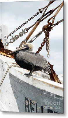 Metal Print featuring the photograph Brown Pelican by Valerie Reeves