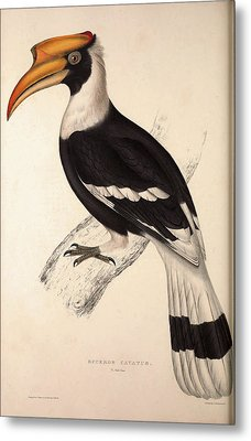 Buceros Cavatus,concave Hornbill. Birds From The Himalaya Metal Print by Quint Lox