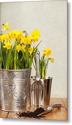 Buckets Of Daffodils Metal Print by Amanda Elwell