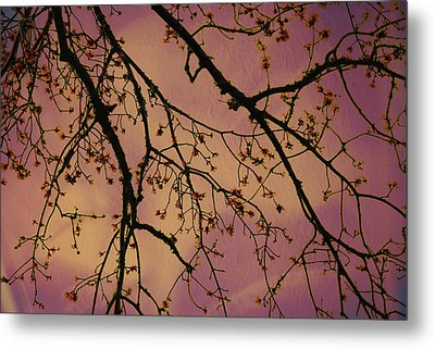 Budding Tree Metal Print by Michele Kaiser