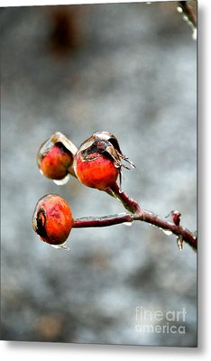 Buds On Ice Metal Print by Bonnie Myszka