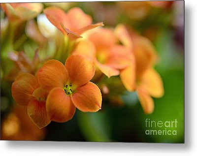 Bunch Of Small Orange Flowers Metal Print by Sami Sarkis