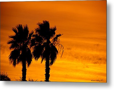 Metal Print featuring the photograph Burning Palms by Kathy Ponce