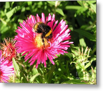 Busy Bee Metal Print by Bev Conover