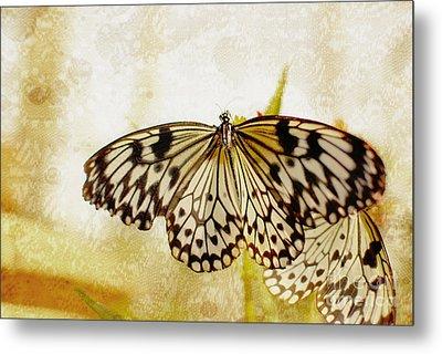 Butterflies On Lace Metal Print by Floyd Menezes