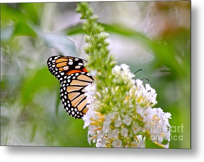 Butterfly Behind Bush Metal Print by Jay Nodianos