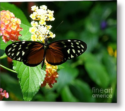 Butterfly Metal Print by Bev Conover