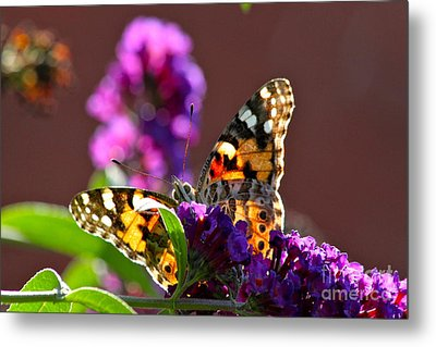 Butterfly Hiding Metal Print by Jay Nodianos