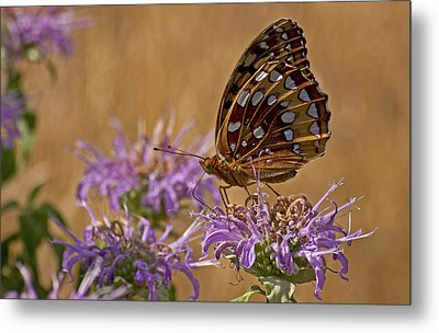 Butterfly On Bee Balm Metal Print by Shelly Gunderson