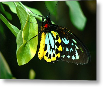 Butterfly On Leaf Metal Print by Laurel Powell