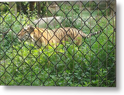 Metal Print featuring the photograph Caged by Fortunate Findings Shirley Dickerson