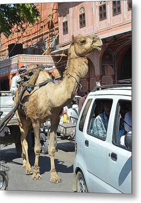 Camel In The Road - India Metal Print by Kim Bemis