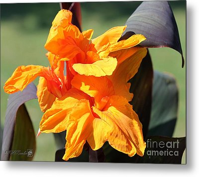 Canna Lily Named Wyoming Metal Print by J McCombie