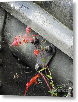 Metal Print featuring the photograph Canon Metal by Randi Grace Nilsberg