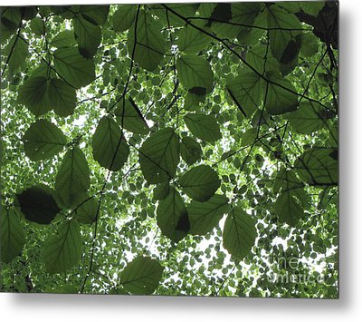 Canopy In Green 3 Metal Print by Melissa Stoudt