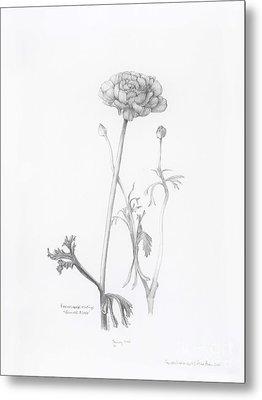 Carlsbad Ranunculus Metal Print
