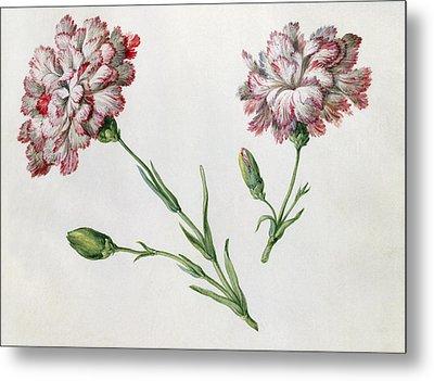 Carnations Metal Print by Claude Aubriet