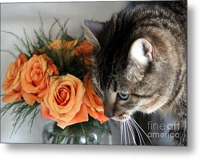 Cat And Roses Metal Print