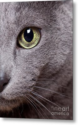 Cat Eye Metal Print by Nailia Schwarz
