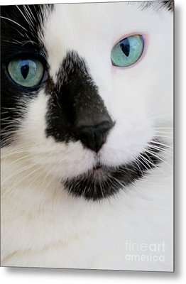 Cat Eyes Metal Print by Birgit Tyrrell