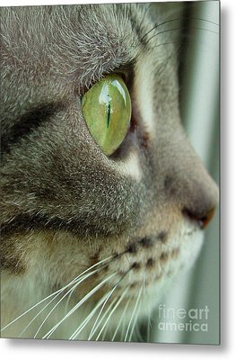 Cat Face Profile Metal Print by Amy Cicconi