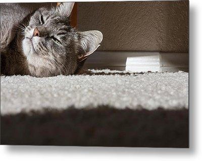 Cat Posing Metal Print