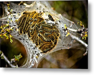 Caterpillars Metal Print by Joel Loftus