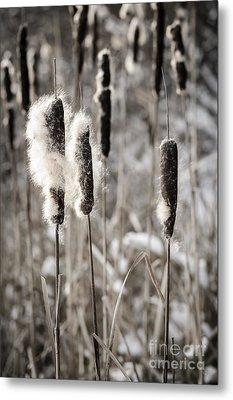 Cattails In Winter Metal Print by Elena Elisseeva