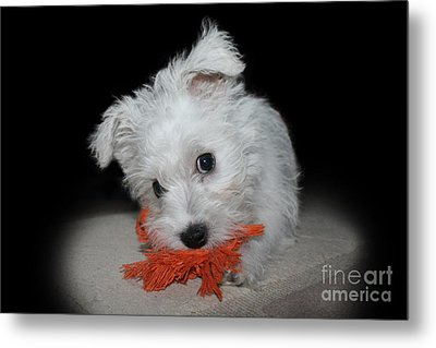 Caught In The Act Metal Print by Terri Waters