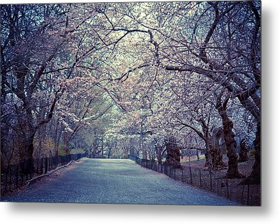Cherry Blossoms - Spring - Central Park Metal Print by Vivienne Gucwa