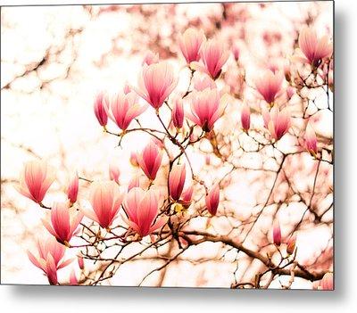Cherry Blossoms - Springtime Blush Pink Metal Print by Vivienne Gucwa
