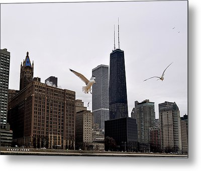 Chicago Birds 2 Metal Print by Verana Stark