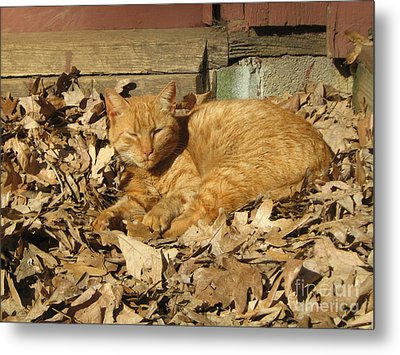 Chillin' Out Metal Print by Wendy Coulson