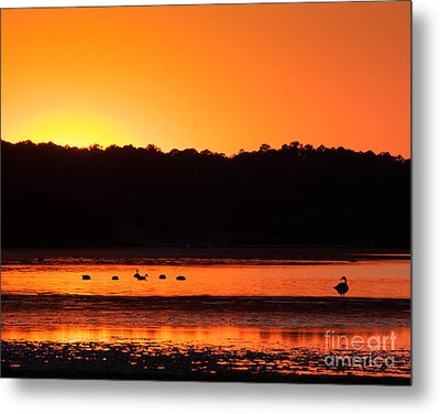 Metal Print featuring the photograph Chincoteague Sunset by Dale Nelson