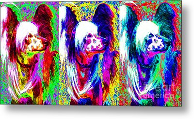 Chinese Crested Dog Three 20130125 Metal Print by Wingsdomain Art and Photography