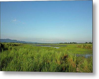 Clear Skies Over A Marsh In Kaziranga Metal Print by Steve Winter