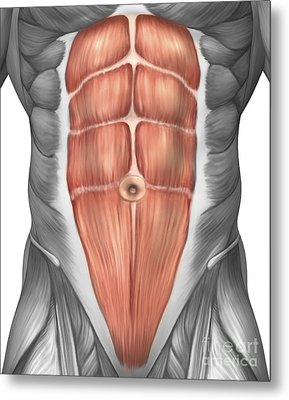 Close-up View Of Male Abdominal Muscles Metal Print by Stocktrek Images