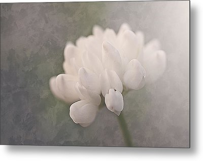 Clover In White Metal Print
