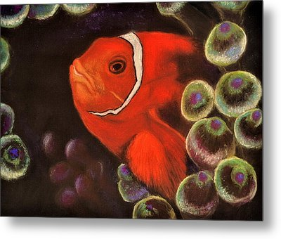 Clown Fish In Hiding  Pastel Metal Print by Antonia Citrino