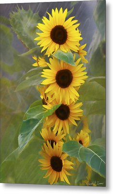 Cluster Of Sunflowers Metal Print by David Simons