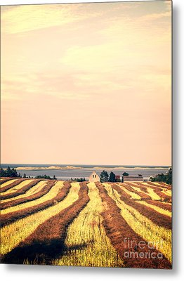 Coastal Farm Pei Metal Print by Edward Fielding